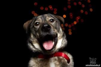 Psy z Palucha Roko