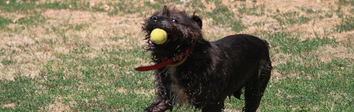 Psy z Palucha