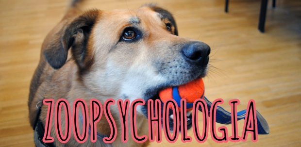 zoopsychologia