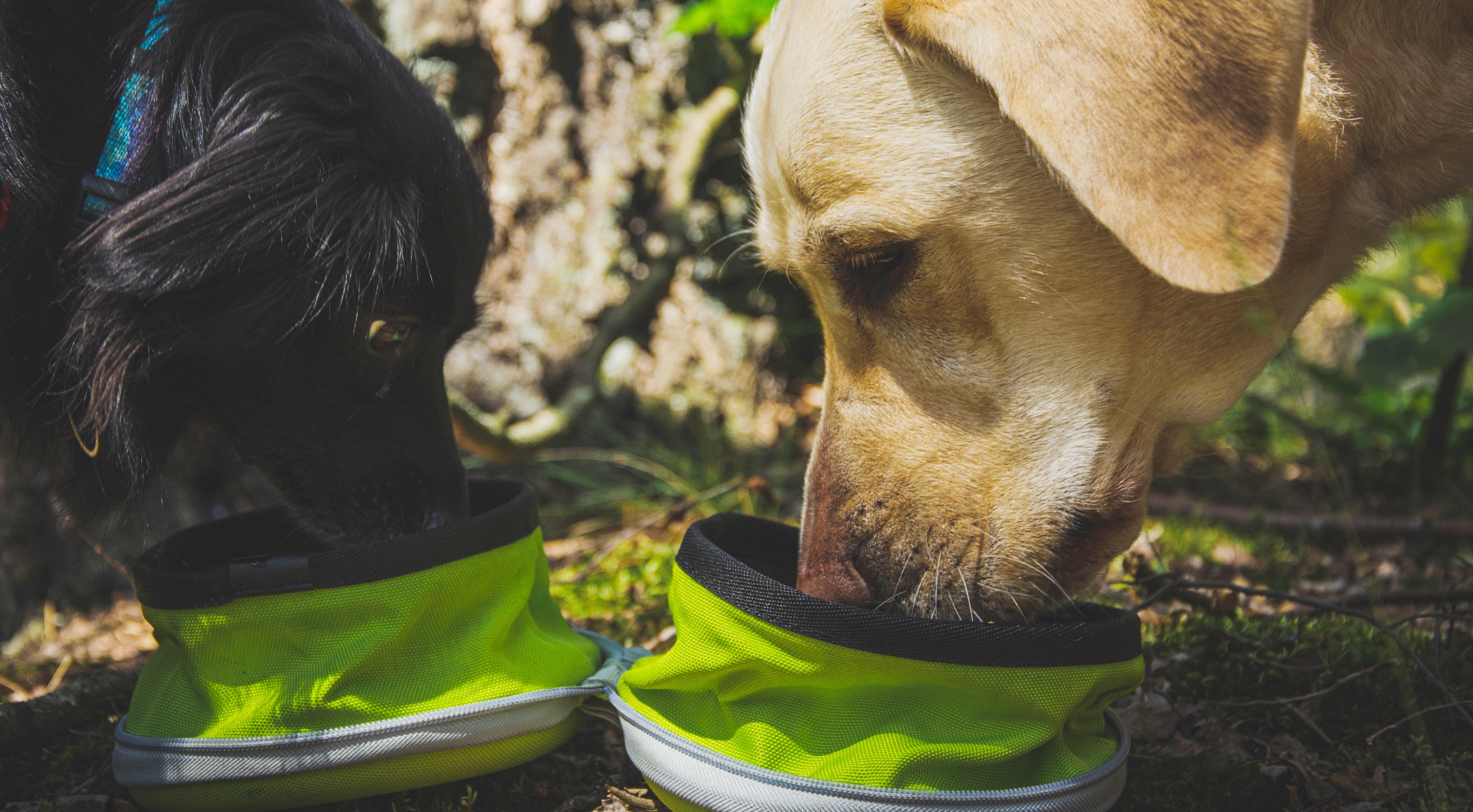 TOP FOR DOG – RECENZJA MISKI TURYSTYCZNEJ TRUELOVE