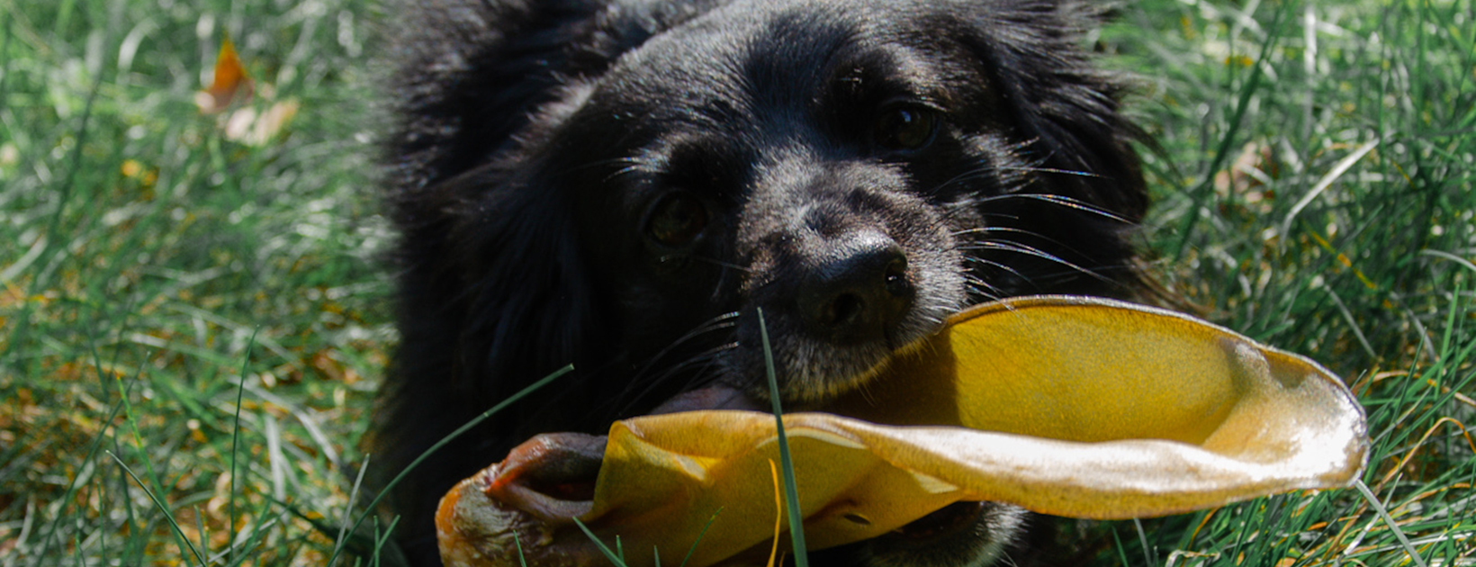 LordZeton naturalne gryzaki dla psów – recenzja dla Top for Dog