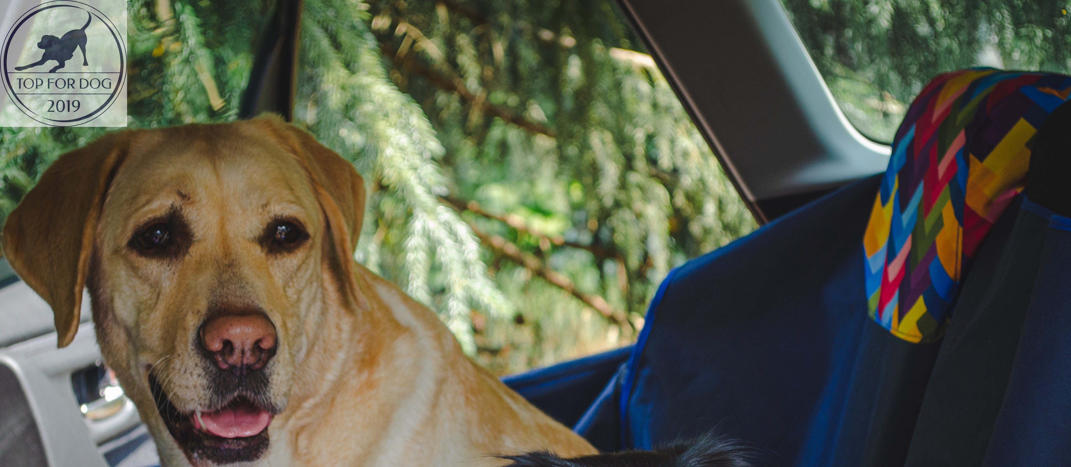 BeBobi mata samochodowa KUKO+ – recenzja dla Top for Dog