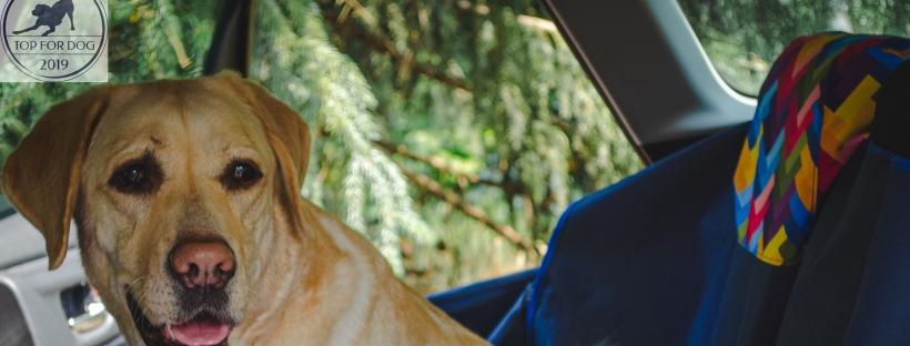 mata samochodowa bebobi top for dog