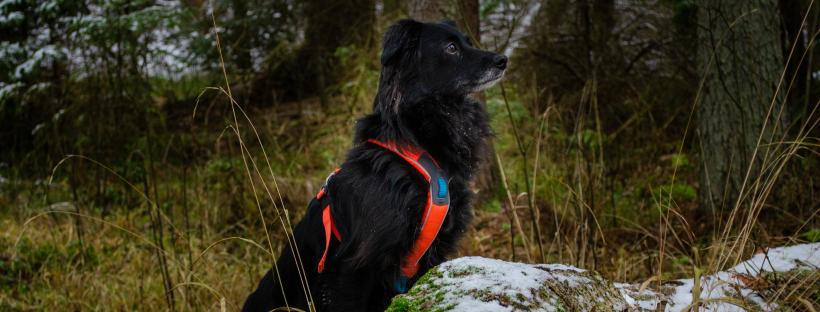 PSIE STRONY ŚWIATA – Białowieża z psem