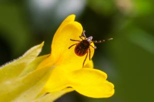 macro-photography-of-insect-in-yellow-flower-3760420